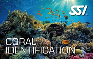 Coral ID.jpg
