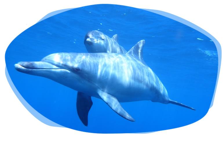 dolphin001.jpg