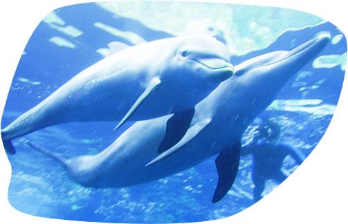 dolphin003.jpg